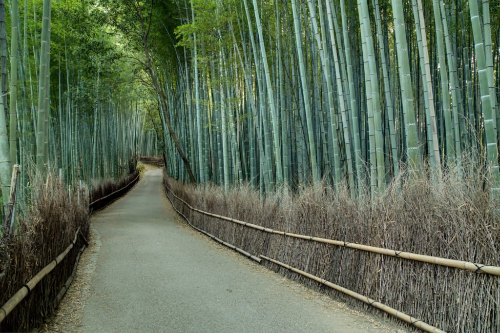 The Kyoto bamboo forrest is one of the most beautiful places in Japan