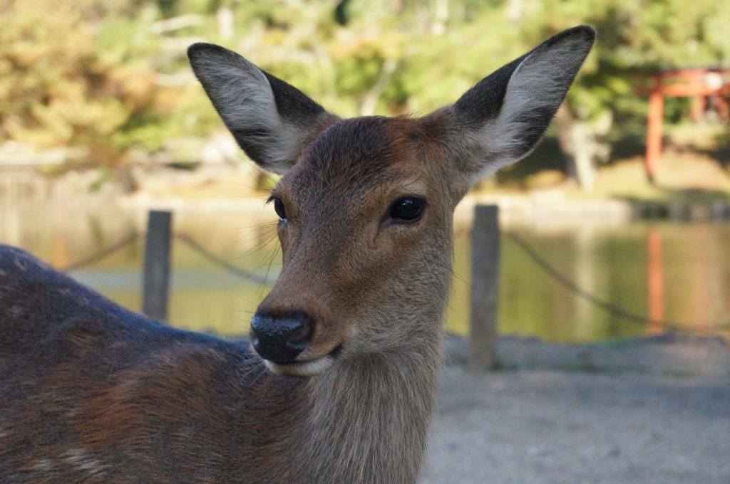 Nara is a wonderful get away destination