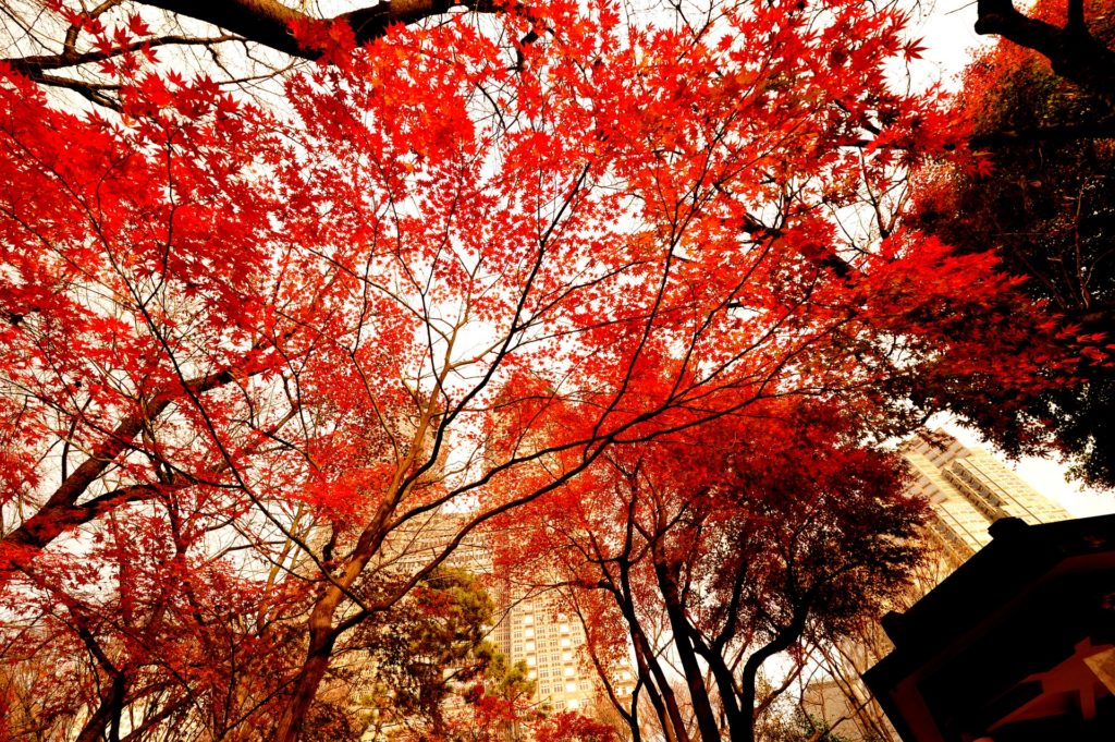 Autumn in Shinjuku is a visual experience