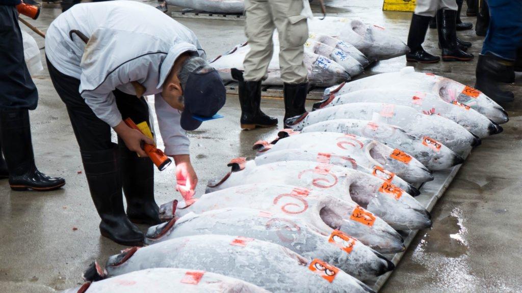 Fish Action at Tsukiji Market